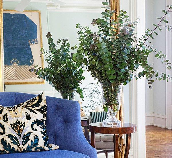 Eukaliptus – ukras svakog enterijera